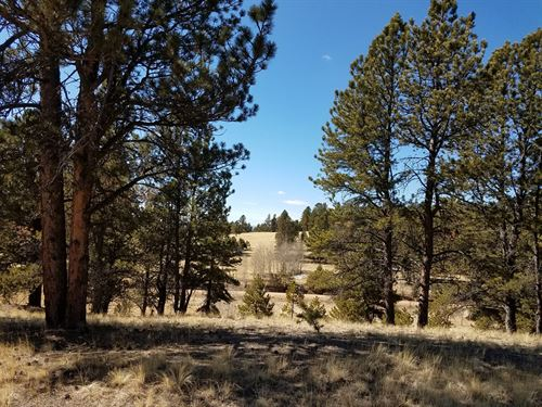 Beautiful 3.75 Acre Property : Florissant : Teller County : Colorado