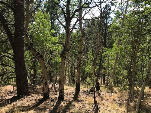Secluded Mountain Property : Cripple Creek : Teller County : Colorado