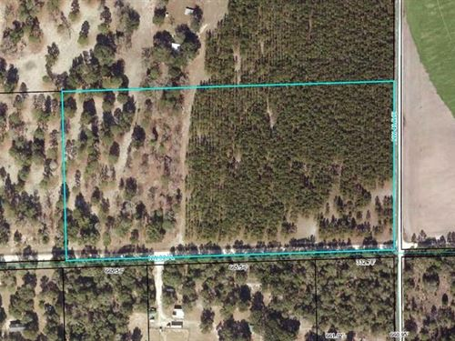 Gilchrist County, 20 Acres, Vacant : Bell : Gilchrist County : Florida