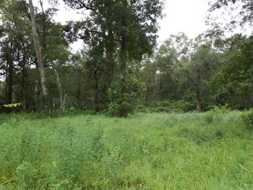 4.6 Acres Heaven Chielfand Florida : Chiefland : Levy County : Florida