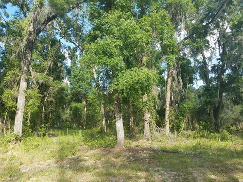 1 Acre Tract, Homes Only, Spanish : Chiefland : Levy County : Florida