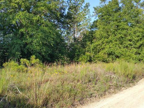 Two 1/4 Acre Lots in Live Oak, FL : Live Oak : Suwannee County : Florida
