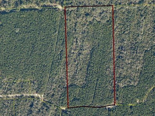 20 Acres in Rural North Florida : Live Oak : Suwannee County : Florida