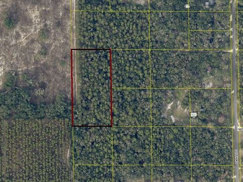5 Acres Close to Live Oak, FL : Live Oak : Suwannee County : Florida