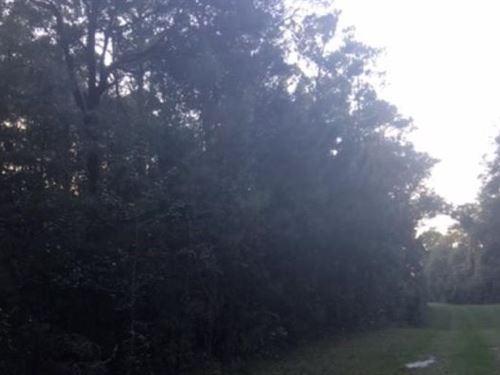 Recreational Property Lafayette : Mayo : Lafayette County : Florida