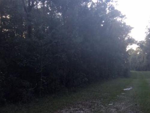Recreational Lot Lafayette County : Mayo : Lafayette County : Florida