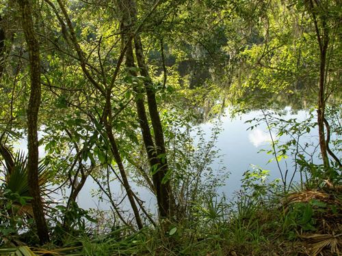 Cleared Suwannee River Lot : Mayo : Lafayette County : Florida