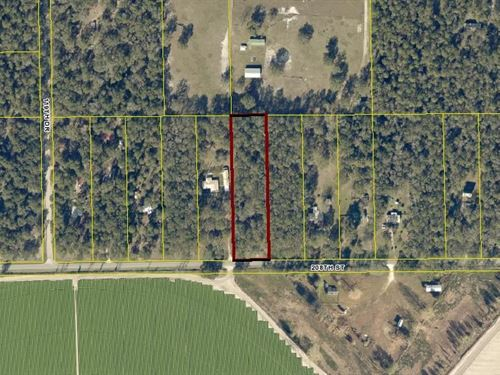 Vacant Land on Paved Road : O'brien : Suwannee County : Florida