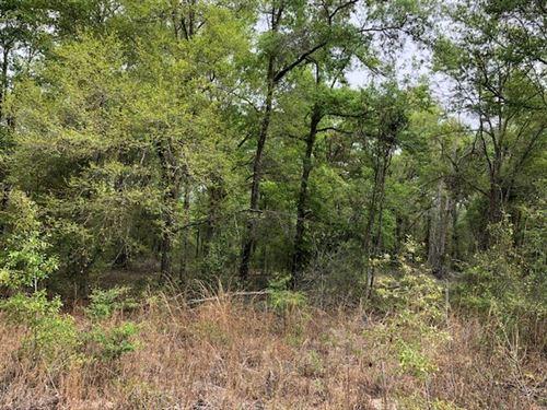 Vacant Land, O'brien : O'brien : Suwannee County : Florida