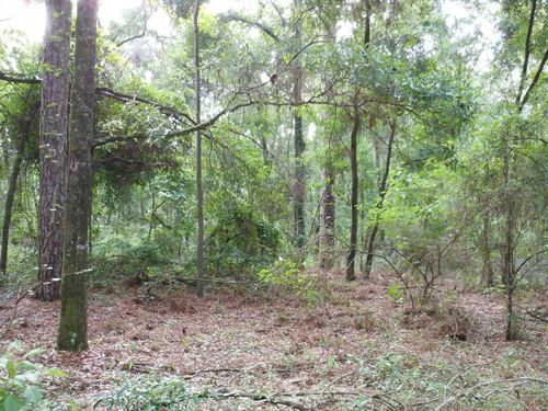 Wooded North FL Lot Close to : O'brien : Suwannee County : Florida