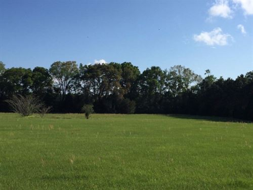 Horse Lovers Dream, Homes Only : Trenton : Gilchrist County : Florida