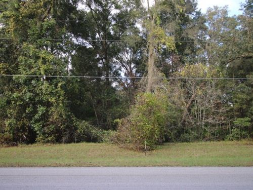 Beautiful Build-Able Home Lot : Trenton : Gilchrist County : Florida