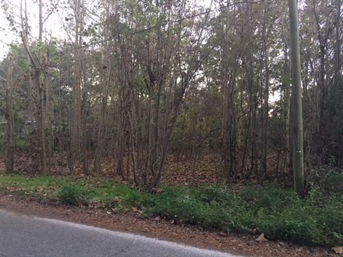 Priced To Sell, Nice Lot City : Trenton : Gilchrist County : Florida