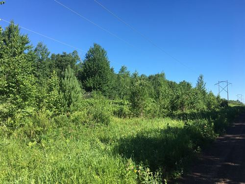 5 Ac Pine Co, Mn, Build / Hunting : Pine City : Pine County : Minnesota