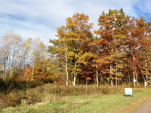 Wooded Building Lot Sandstone, MN : Sandstone : Pine County : Minnesota