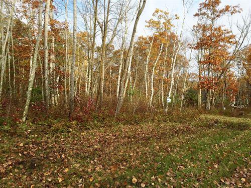 2+ Acre Building Lot Sandtone MN : Sandstone : Pine County : Minnesota