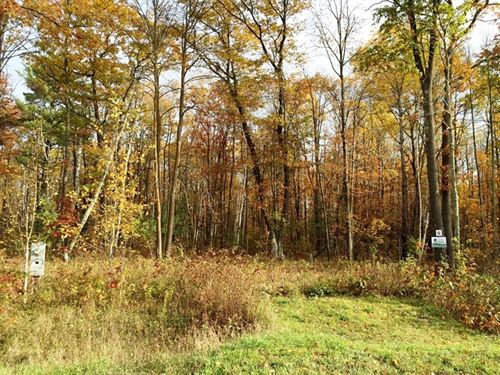 Wooded Lot / Mature Trees : Sandstone : Pine County : Minnesota