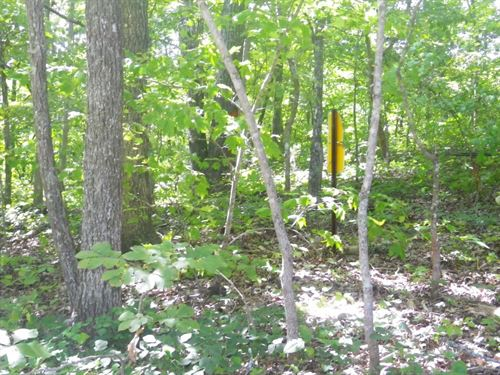 19 Surveyed Acres, Wooded, Hunting : West Plains : Howell County : Missouri