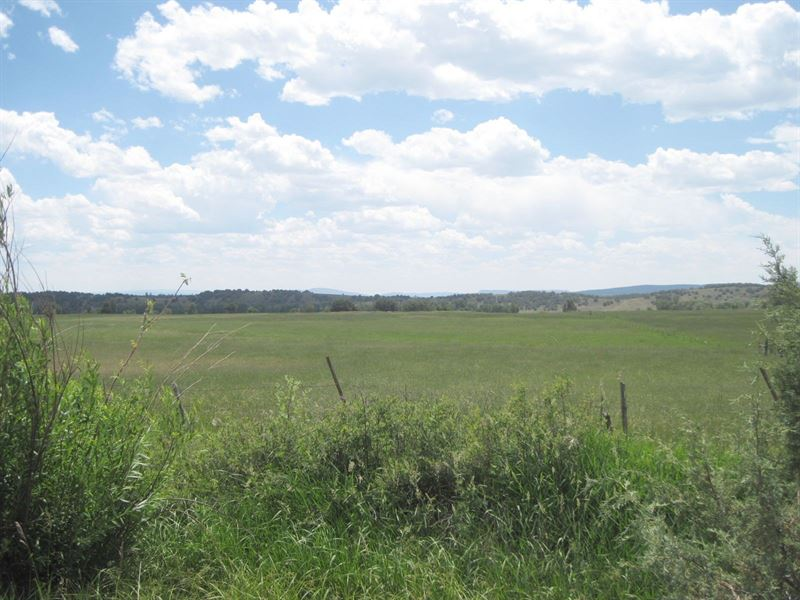 Northern Nm Pasture 8.8 Acres Water : Chama : Rio Arriba County : New Mexico