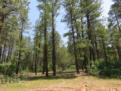 Chama NM Recreational Land : Chama : Rio Arriba County : New Mexico