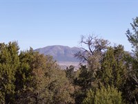 Central NM Residential Wooded Lot : Edgewood : Santa Fe County : New Mexico