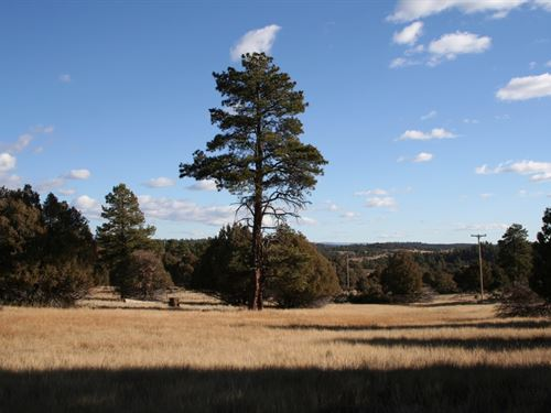 Land Heron Lake NM Well Electricty : Los Ojos : Rio Arriba County : New Mexico