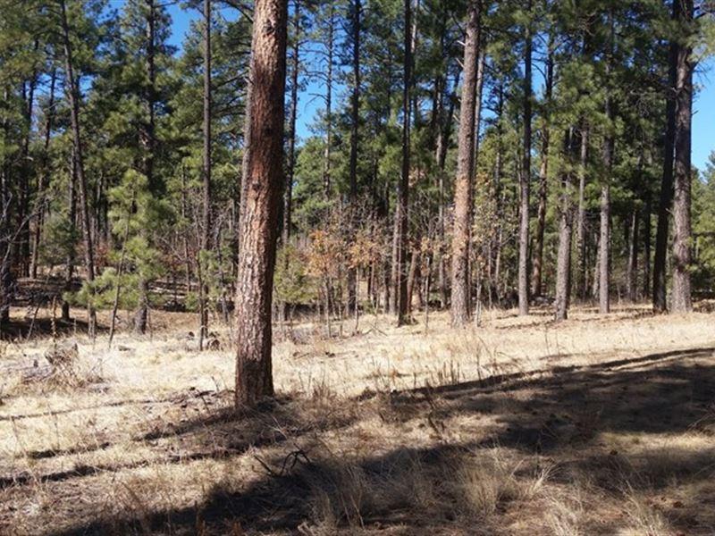 Mountain Property in Ruidoso, NM : Ruidoso : Lincoln County : New Mexico