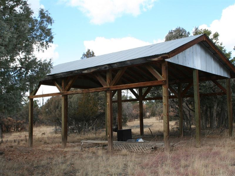 Northern NM Lot Nr Heron Lake Trees : Rutheron : Rio Arriba County : New Mexico