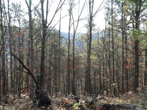 Recreational Hunting Land For Sale : Candor : Tioga County : New York