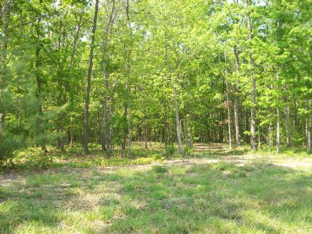 8.44 Acres/gently Rolling/homesite : Pikeville : Bledsoe County : Tennessee