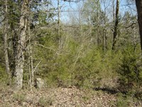 Private Wooded Land TN TN River : Bath Springs : Decatur County : Tennessee