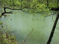 Recreational Creek Lot, Fishing : Savannah : Hardin County : Tennessee