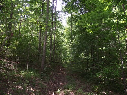 Wooded Tn Land, Spring, Timber : Waynesboro : Wayne County : Tennessee