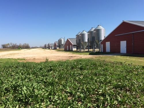 Poultry Farm, Morris County Texas : Omaha : Morris County : Texas