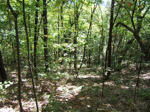 Wooded Mountain Lot In Abingdon VA : Abingdon : Washington County : Virginia
