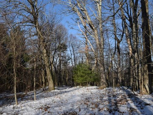 Wooded Acreage View Floyd County : Copper Hill : Floyd County : Virginia