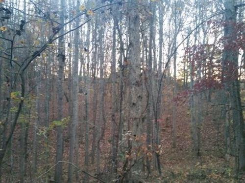 Hunting Property Nature Retreat : Spencer : Patrick County : Virginia