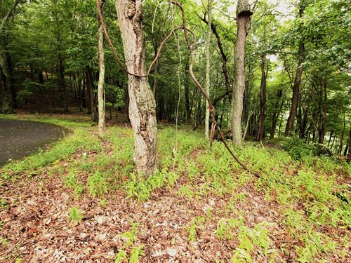 Elevated Acreage Great Potential : Independence : Grayson County : Virginia