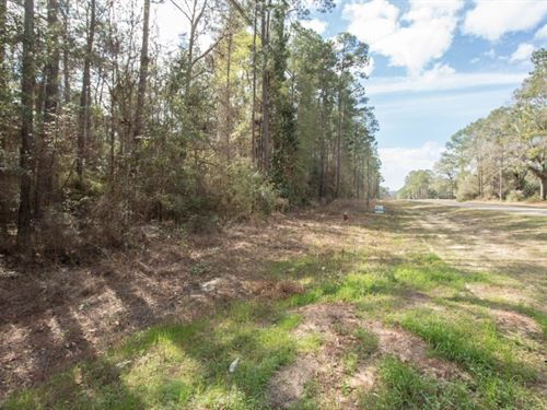 .52 Acre Below Geneva AL Wooded Lot : Geneva : Alabama