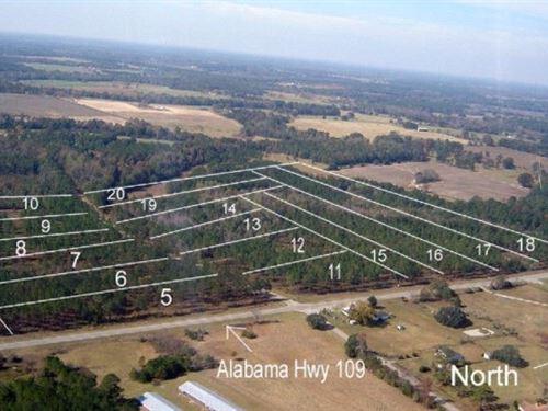 Land For Sale in Houston County, AL : Slocomb : Houston County : Alabama