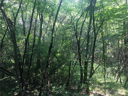 5.25 Acre Wooded Tract Road : Chatsworth : Murray County : Georgia