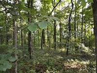 Beautiful Wooded Corner Lot Located : Jasper : Pickens County : Georgia