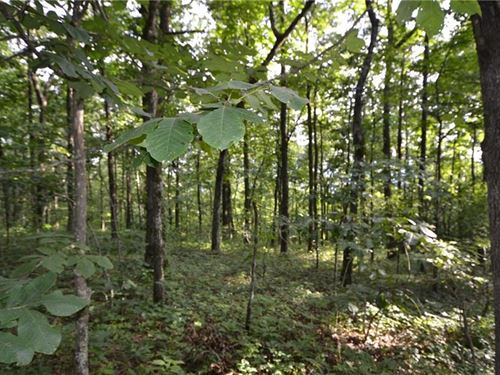 Beautiful Wooded Corner Lot Located : Jasper : Pickens County : Georgia