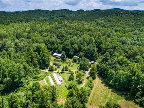 5 Ac Healthy Homestead Talking : Talking Rock : Pickens County : Georgia