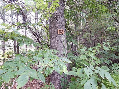Maine Land For Sale in Burlington : Burlington : Penobscot County : Maine