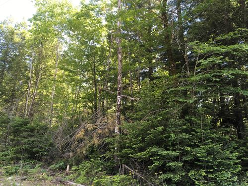 Maine Land For Sale in Orono : Orono : Penobscot County : Maine