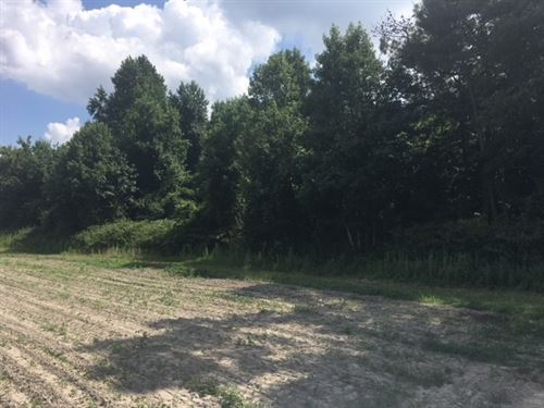 2 Acre Wooded Lot Country : Harrellsville : Hertford County : North Carolina