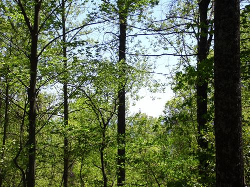 Beautiful Mountain Top Lot : Hayes : Wilkes County : North Carolina