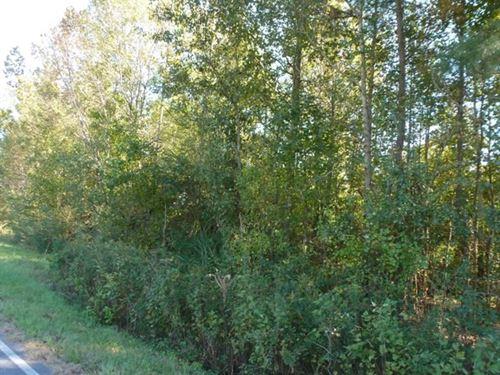 Sarecta Rd Wooded Residential Land : Pink Hill : Duplin County : North Carolina