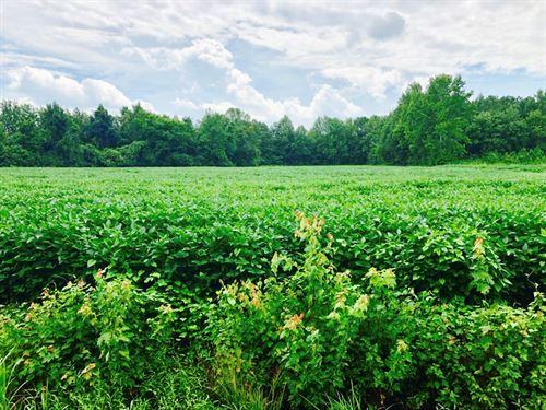 Timberland/Farmland Washington : Roper : Washington County : North Carolina